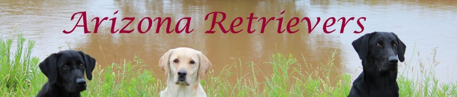 Arizona Retrievers